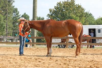 North River Riding Club Horse Show 6-27-09 Gordo 042