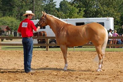 North River Riding Club Horse Show 6-27-09 Gordo 044