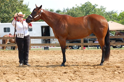 North River Riding Club Horse Show 6-27-09 Gordo 038