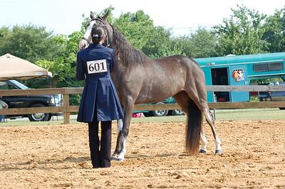 North River Riding Club Horse Show 6-27-09 Gordo 054
