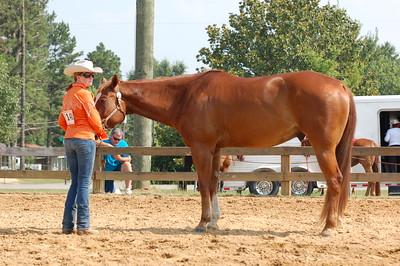 North River Riding Club Horse Show 6-27-09 Gordo 041