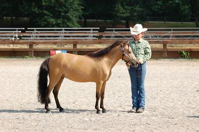 North River Riding Club Horse Show June 20 th Sokol Park Arena 059