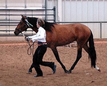 Rocky Mountain Iberian Horse Club Show