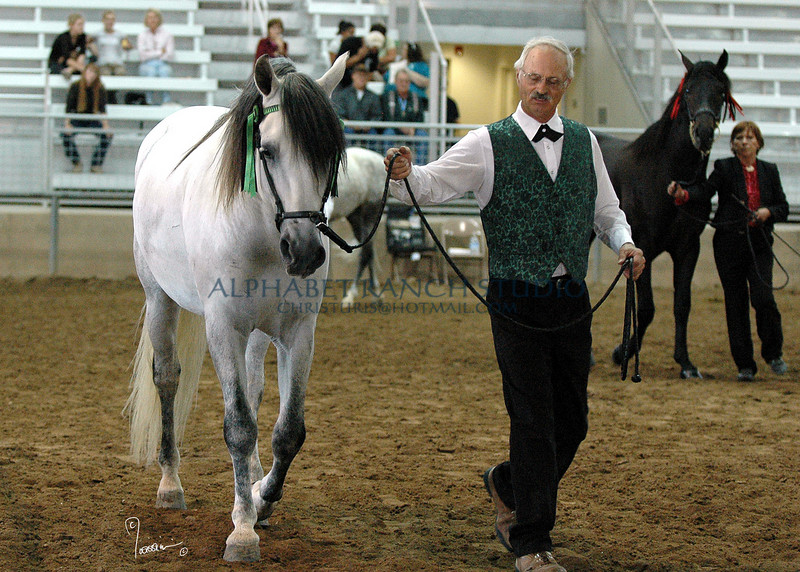 Ciclon, Andalusian stallion (PRE) with his trainer, Tom Smith.  In the background, Chris Mills with Gary Epp's stallion.