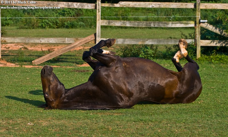 I have never heard a horse make such pleasurable noises as Jackson does when he rolls. It is enough to make you want to throw yourself on the ground and give it a try.