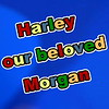 Harley Our Beloved Morgan