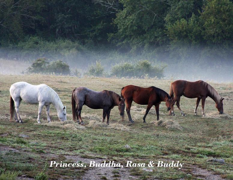 Horse Play Annual 2020 Horse Ccalendar