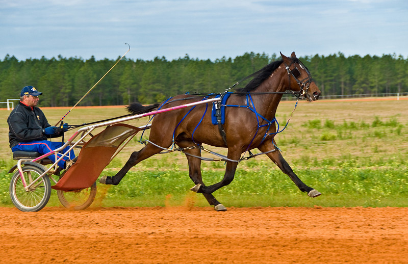 Destined Hanover_James Dean_1
