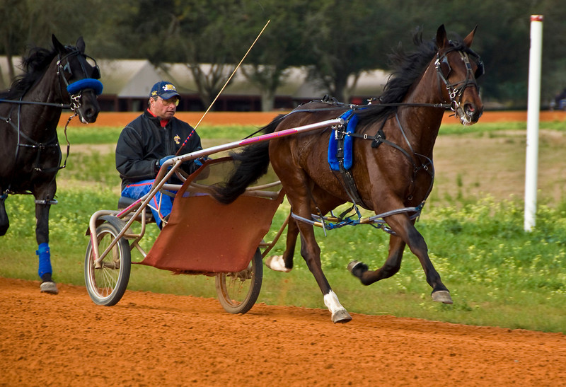 Gargantua Hanover is trained by James Dean Stables.