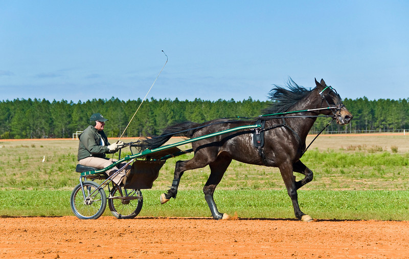 Hall's Star Hanover_Bill Herman_4