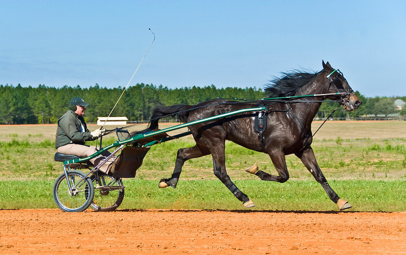 Hall's Star Hanover_Bill Herman_5