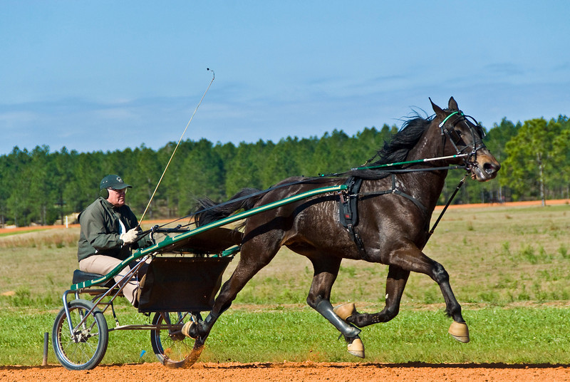 Hall's Star Hanover_Bill Herman_1