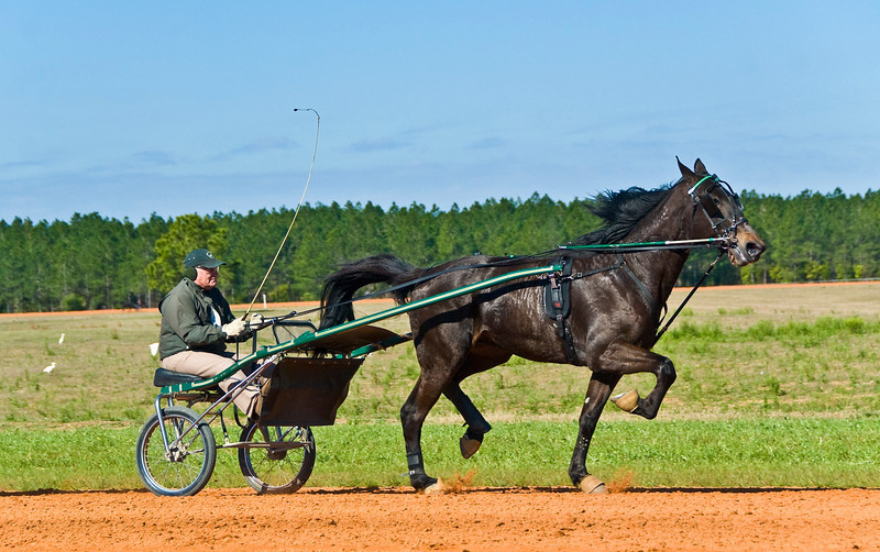 Hall's Star Hanover_Bill Herman_3