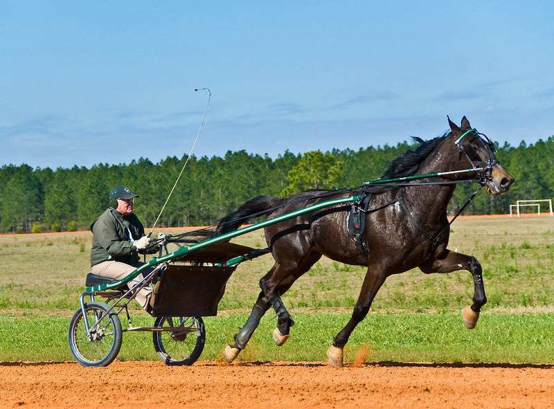 Hall's Star Hanover_Bill Herman_8