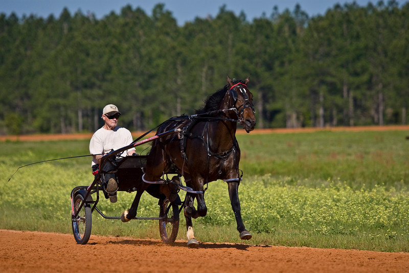 DICK ANDERSON STABLES<br /> TRAINER:DICK ANDERSON