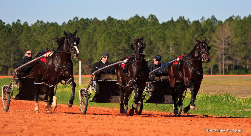 Group Training -Big Easy 1,Louisthecardshark 2 Seargeant Stryker 3-7