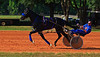 2011 STANDARDBRED HORSES IN TRAINING : 41 galleries with 1324 photos