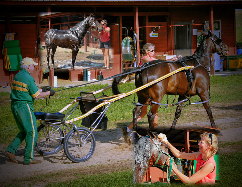 The grooms dress the horses for their training sessions and attach and detach the horses from the carts. It is important that the equipment be fitted to the horse properly for the safety of the horse and trainer.