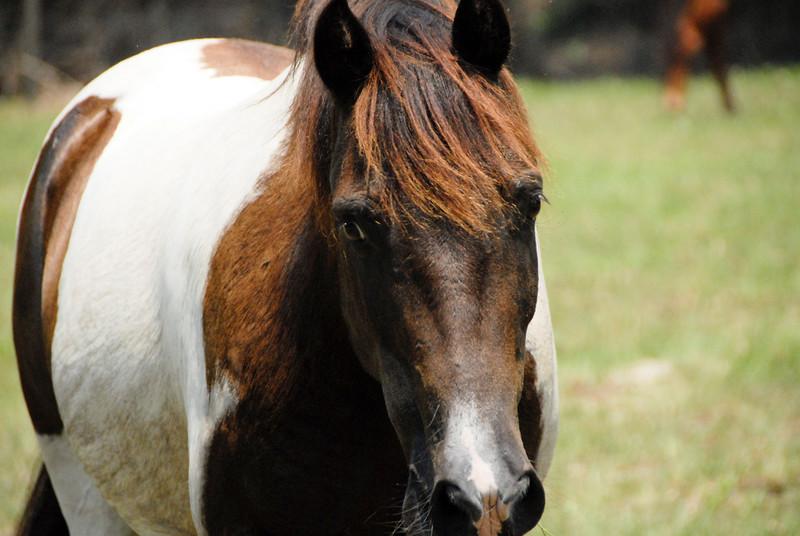 Jody's ponies gallery69