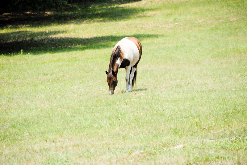 Jody's ponies gallery68