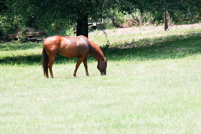 Jody's ponies gallery101