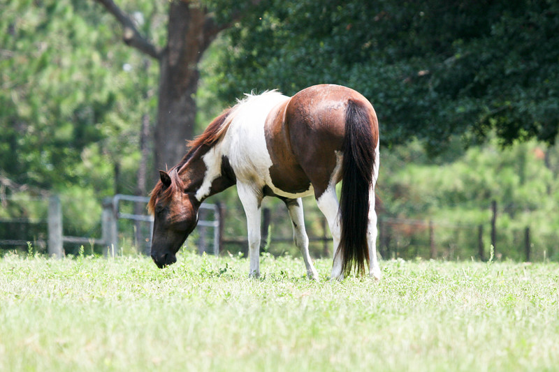 Jody's ponies gallery148