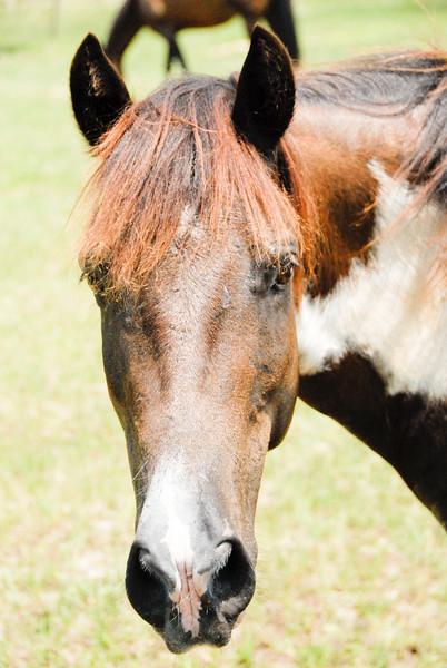 Jody's ponies gallery80