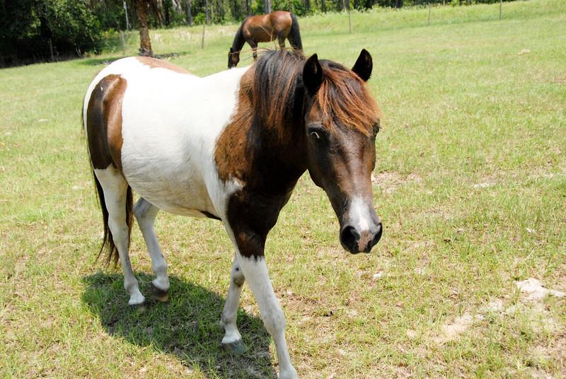 Jody's ponies gallery72