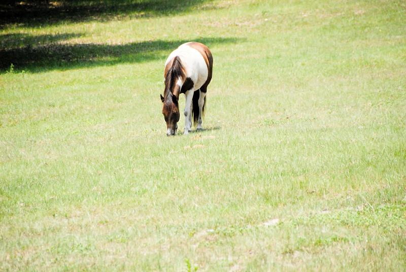 Jody's ponies gallery67