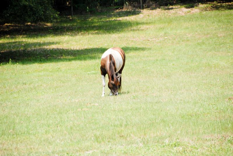 Jody's ponies gallery63