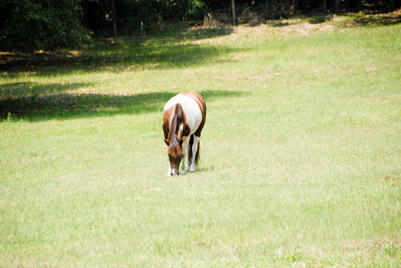 Jody's ponies gallery64