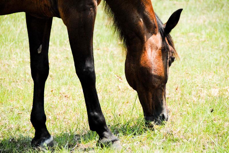 Jody's ponies gallery85
