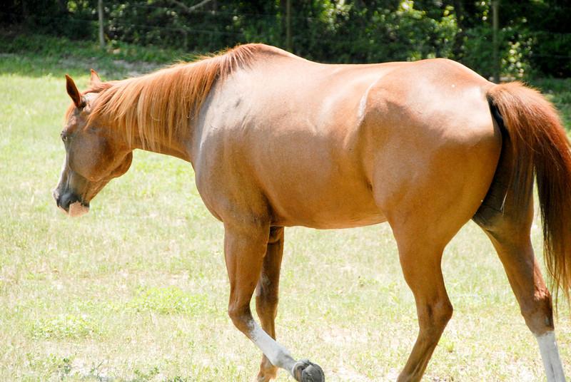 Jody's ponies gallery97