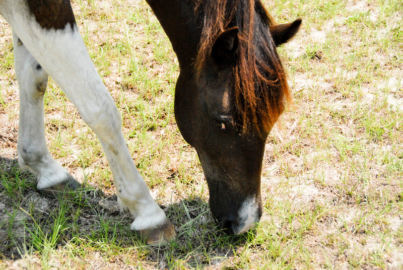 Jody's ponies gallery77