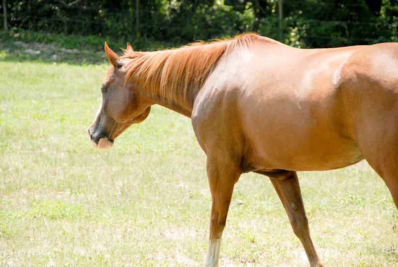 Jody's ponies gallery96