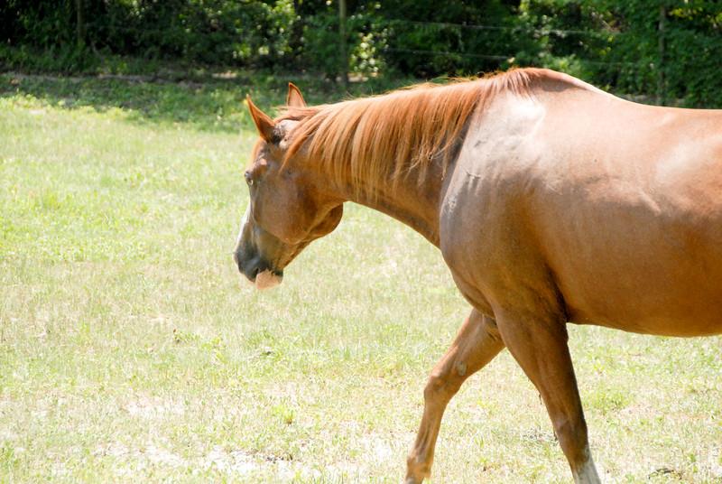 Jody's ponies gallery95