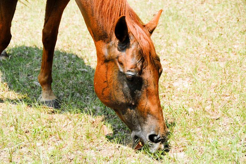 Jody's ponies gallery87