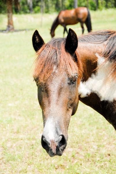 Jody's ponies gallery79