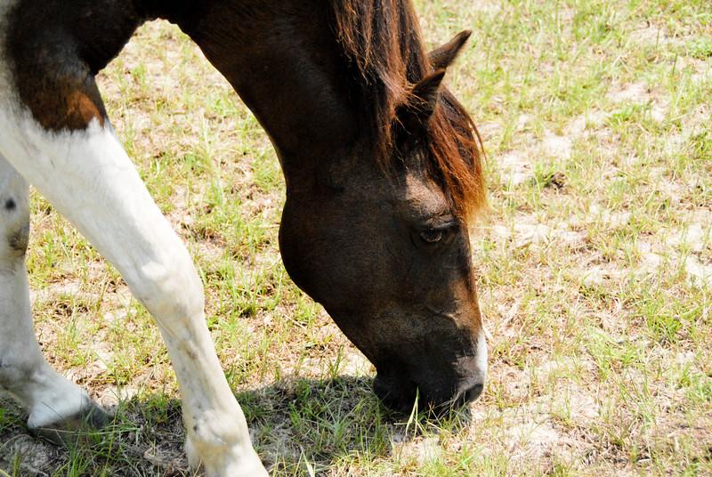 Jody's ponies gallery75