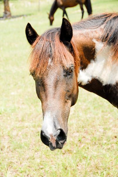 Jody's ponies gallery78