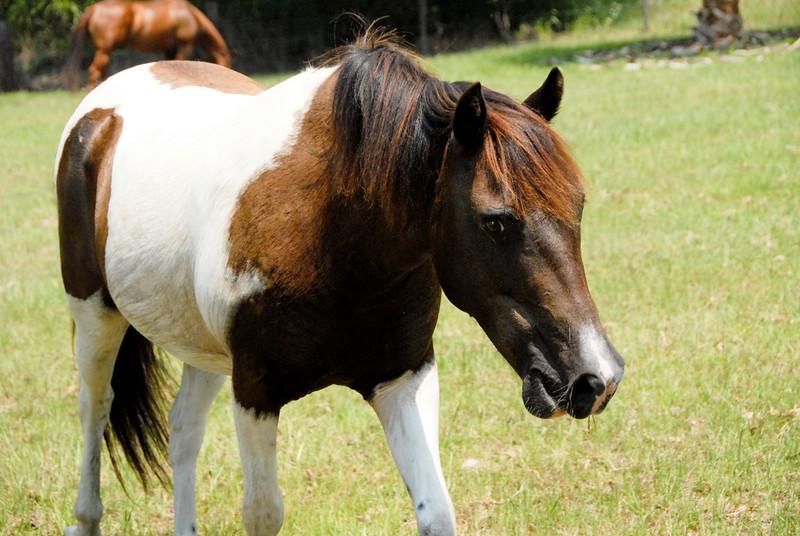 Jody's ponies gallery70