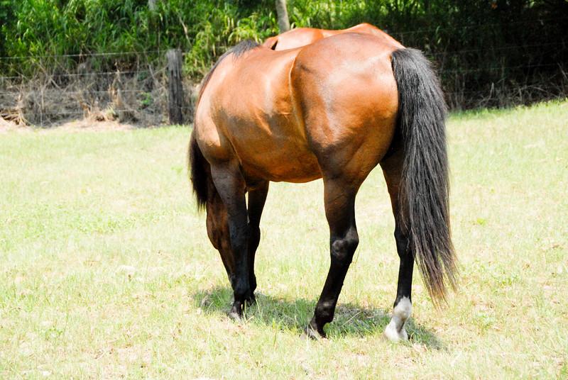 Jody's ponies gallery82