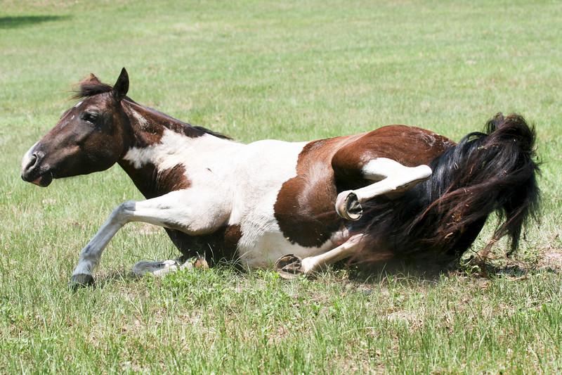 Jody's ponies gallery109