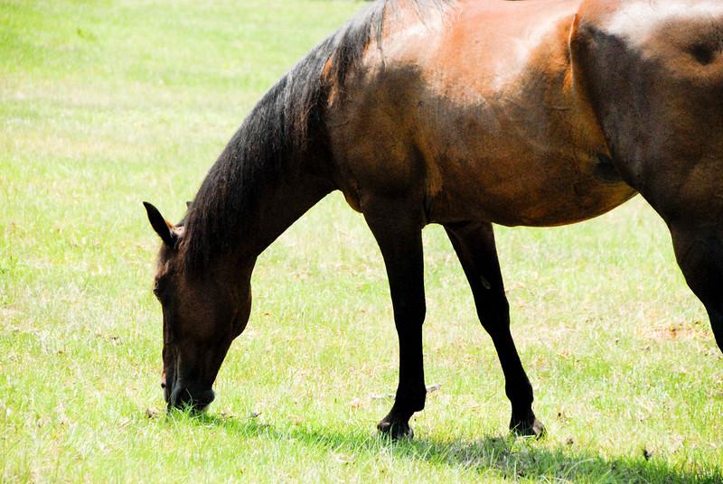 Jody's ponies gallery89