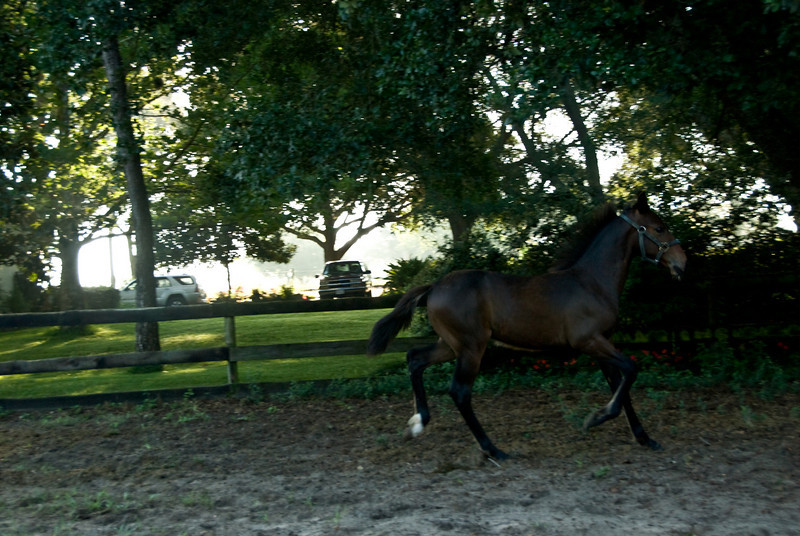 Harry  the Trotter_1