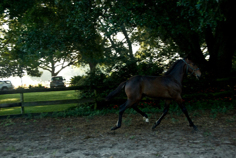 Harry  the Trotter_2