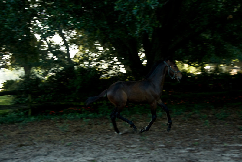 Harry  the Trotter_3