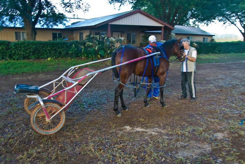 Destined Hanover  2yr old colt  pacer
