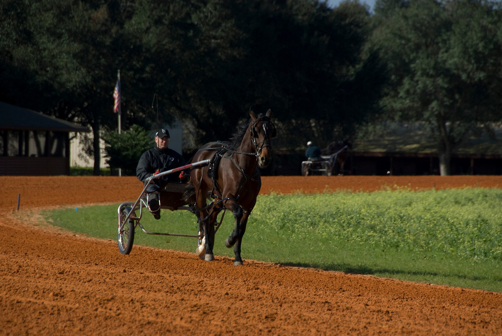 Jim Cruise Stables_9