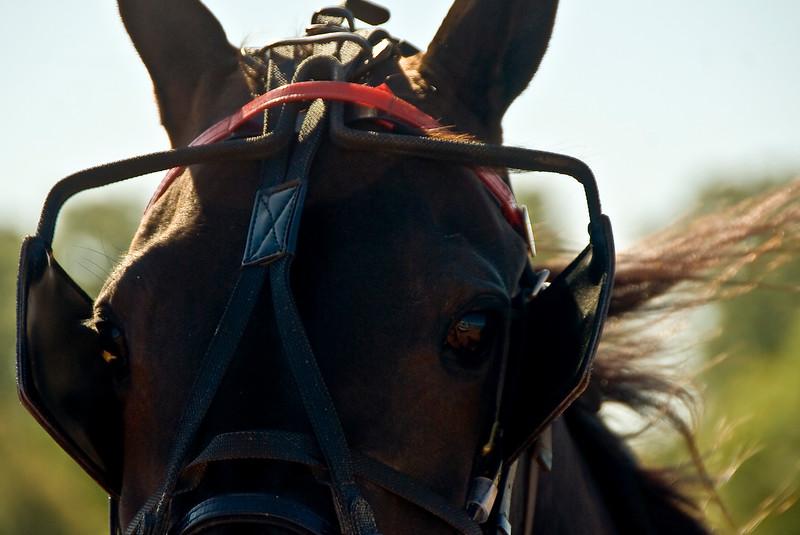 Eyeof a horse_4